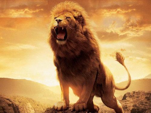 lion roaring sound download